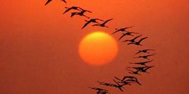Incantevoili tramonti